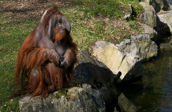Zoo & Live Animal Show